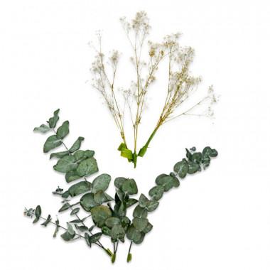 Trockenblumen Deko-Set - Eukalyptus und Schleierkraut Natur
