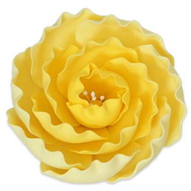 Zucker Pfingstrose - Gelb (1 Stück)